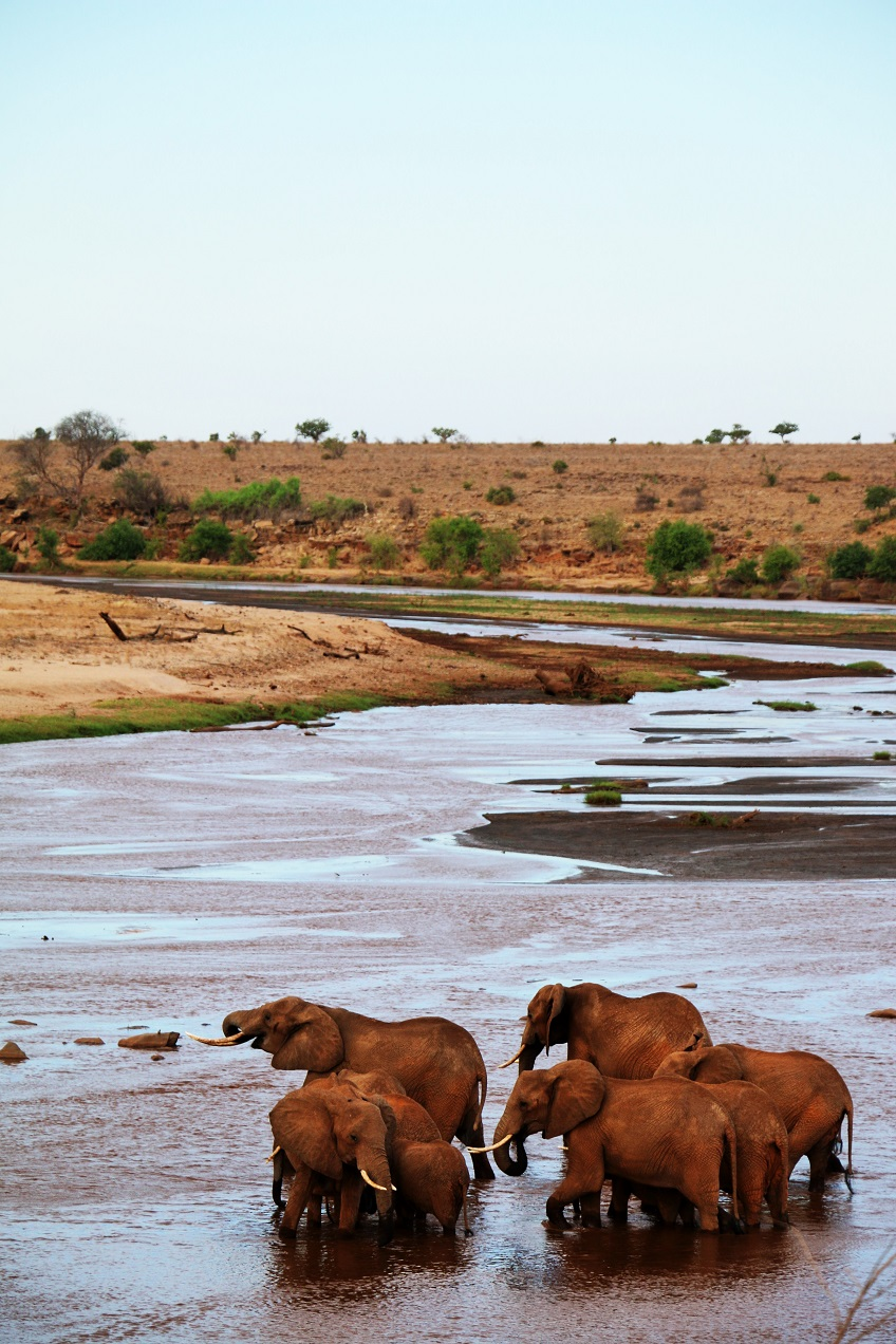 elephants tsavo