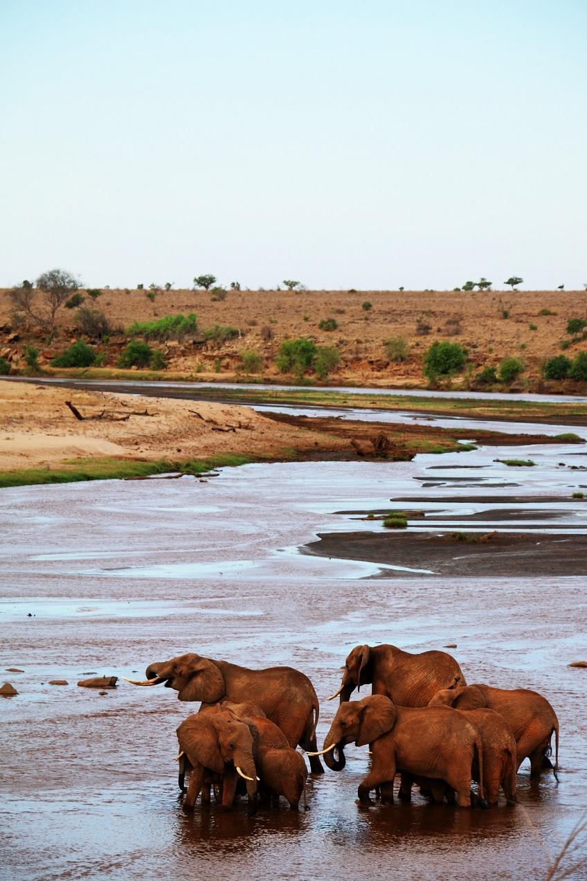 elephants tsavo